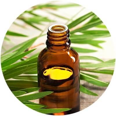 organic ingredients organic hair care